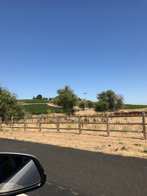 Drive to Sonoma